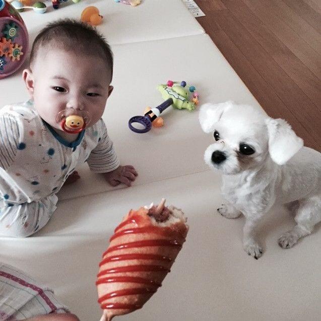 bebes_perros_8