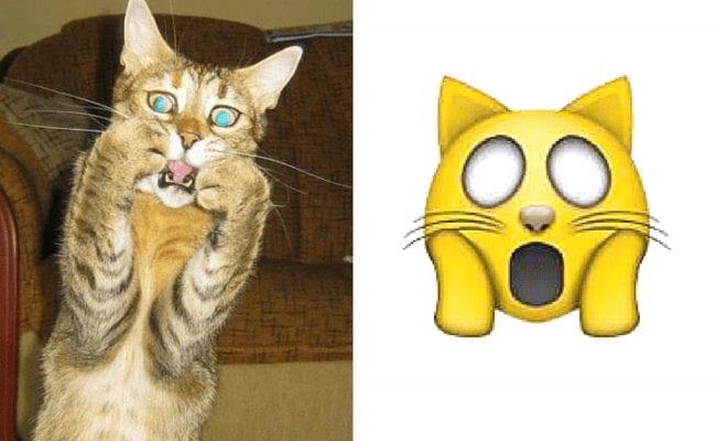 emoticonos-gatos.10