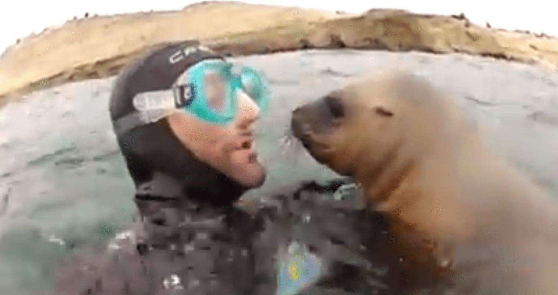 foca amorosa destacada