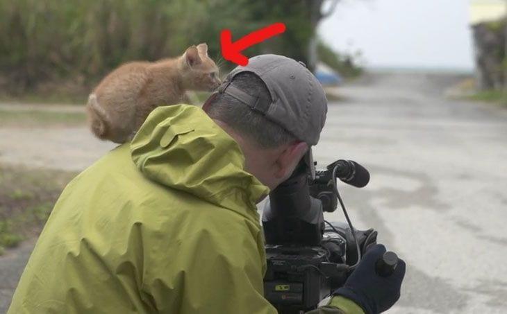 gato curioso 1 copia