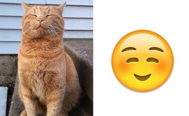 gatos-emoticonos-1