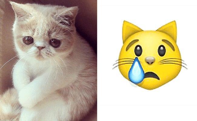 gatos-emoticonos-11