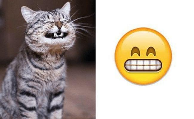 gatos-emoticonos-13