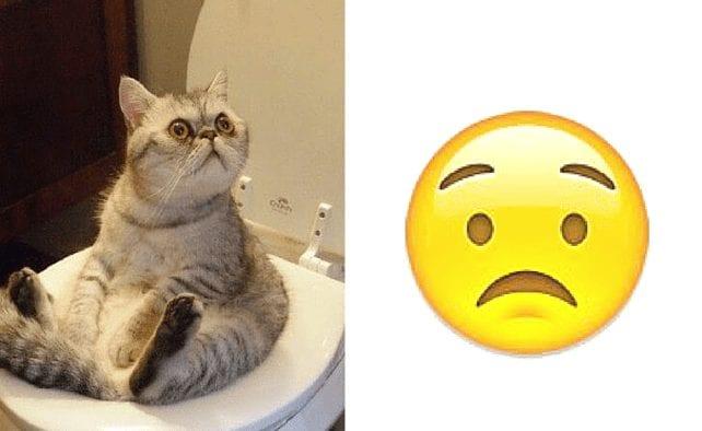 gatos-emoticonos-2