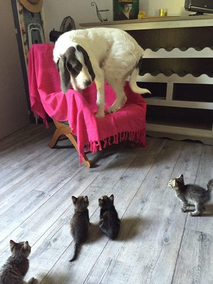 gatos_y_perros_1