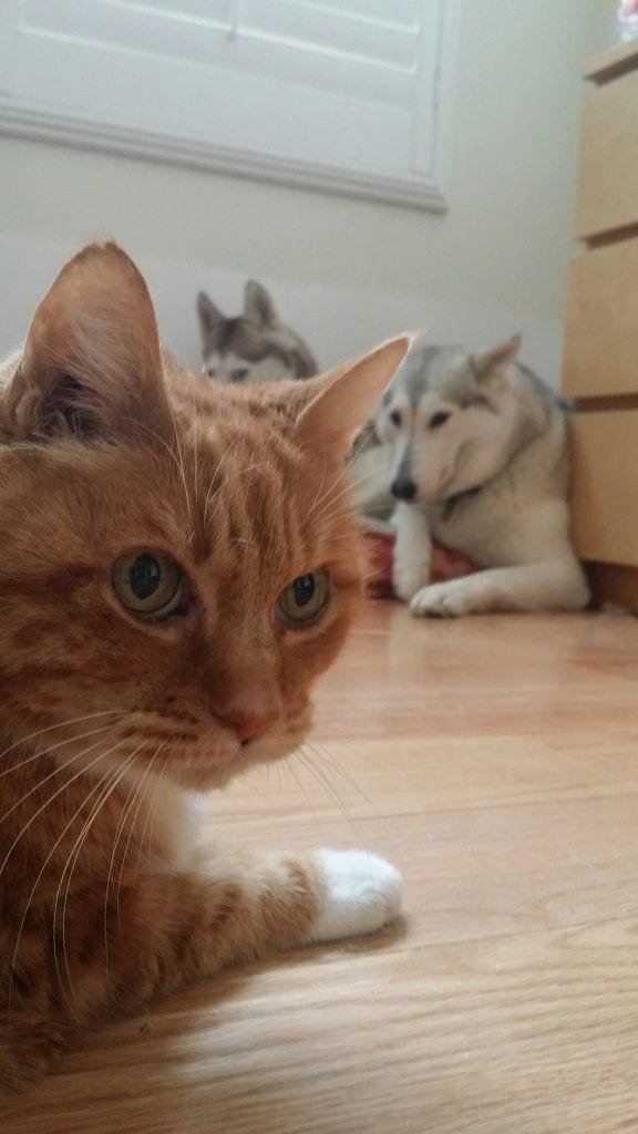 gatos_y_perros_11