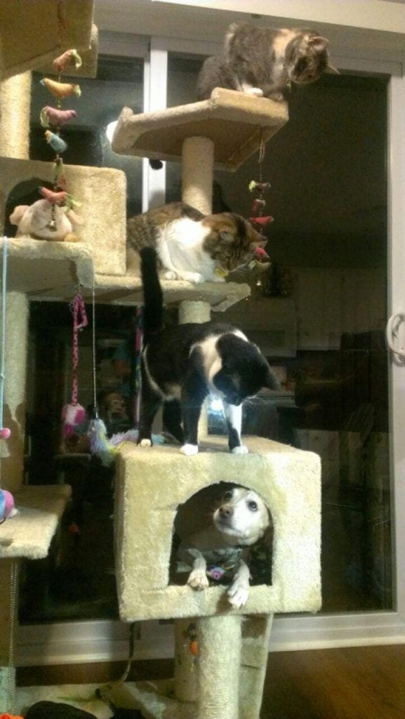 gatos_y_perros_12