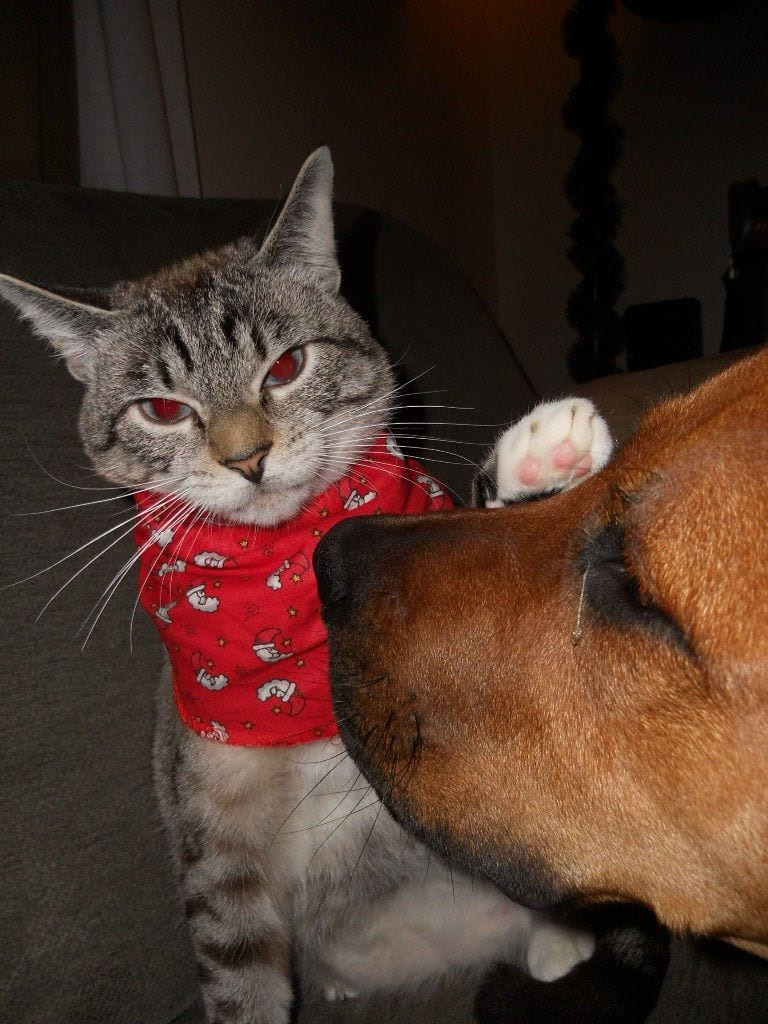 gatos_y_perros_14