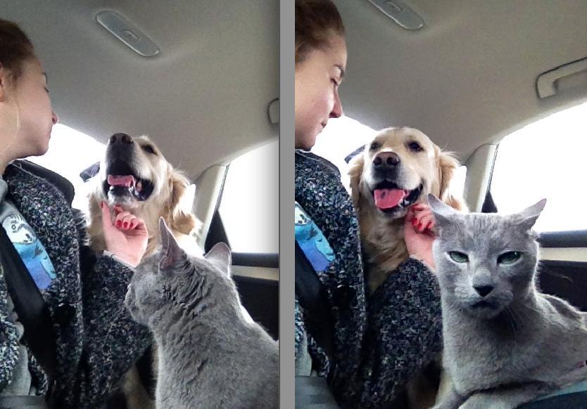 gatos_y_perros_15