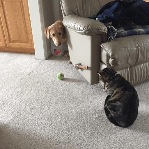 gatos_y_perros_16