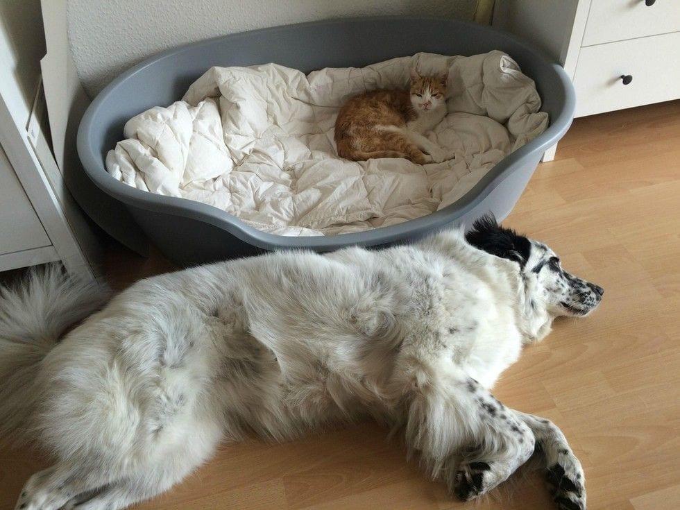 gatos_y_perros_2