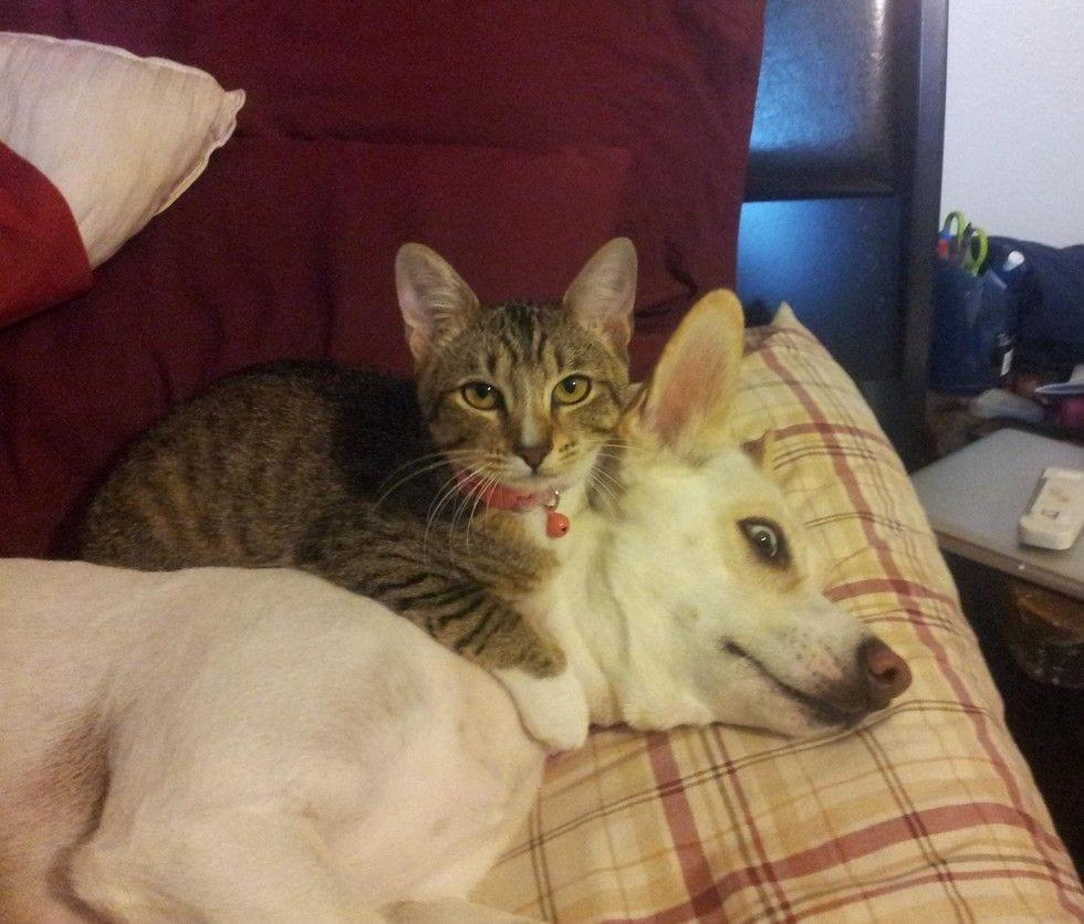 gatos_y_perros_3