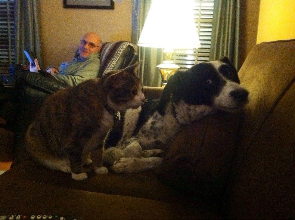 gatos_y_perros_4
