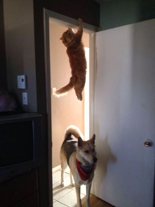 gatos_y_perros_7