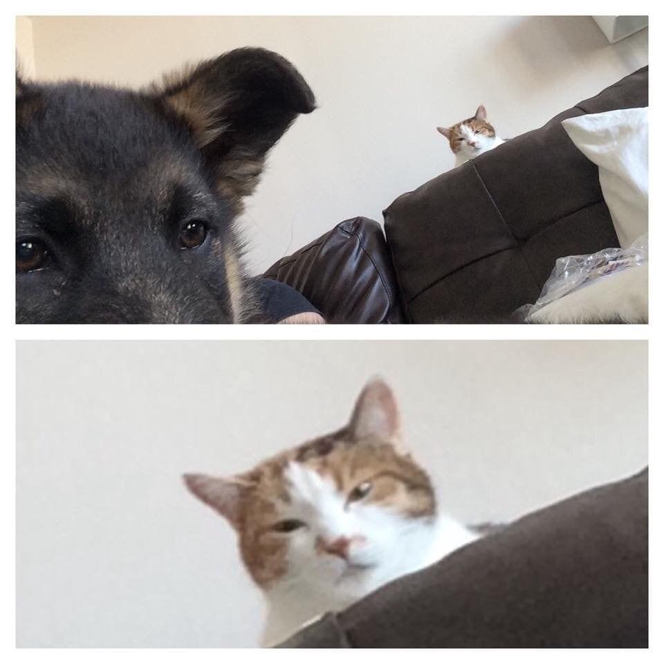 gatos_y_perros_8