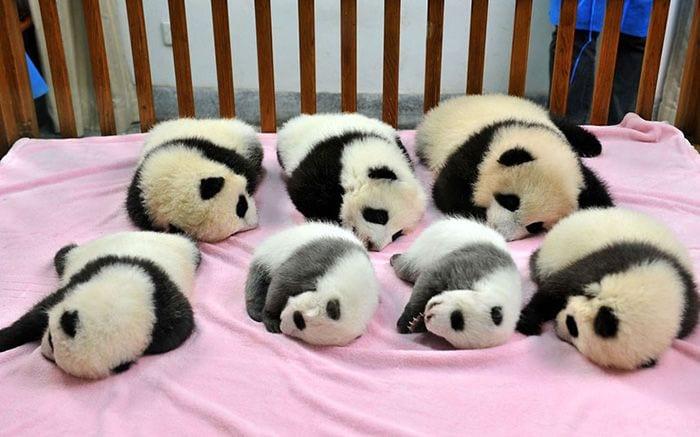 guarderia pandas 1