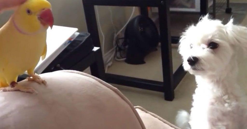 pajaro perro caricias