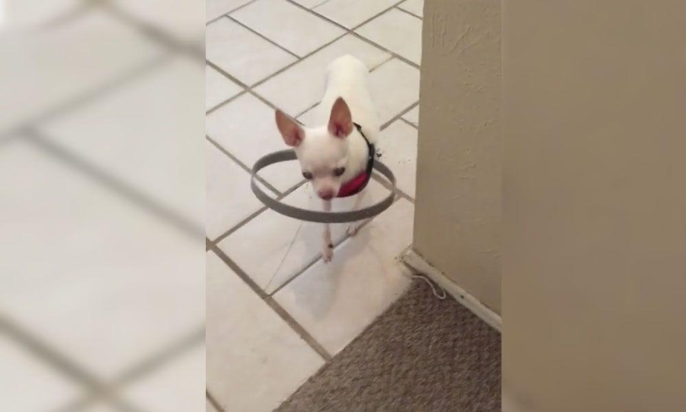 perro ciego portada