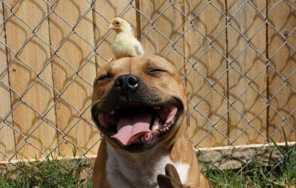 perros peligrosos destacada