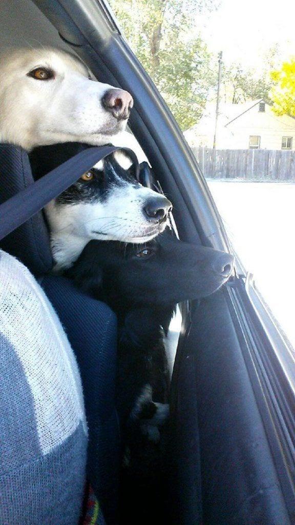 perros_mejores_amigos_8