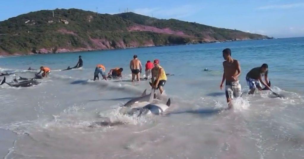 rescate delfines