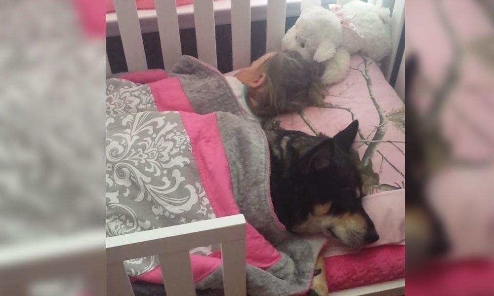 siesta perro bebe portada