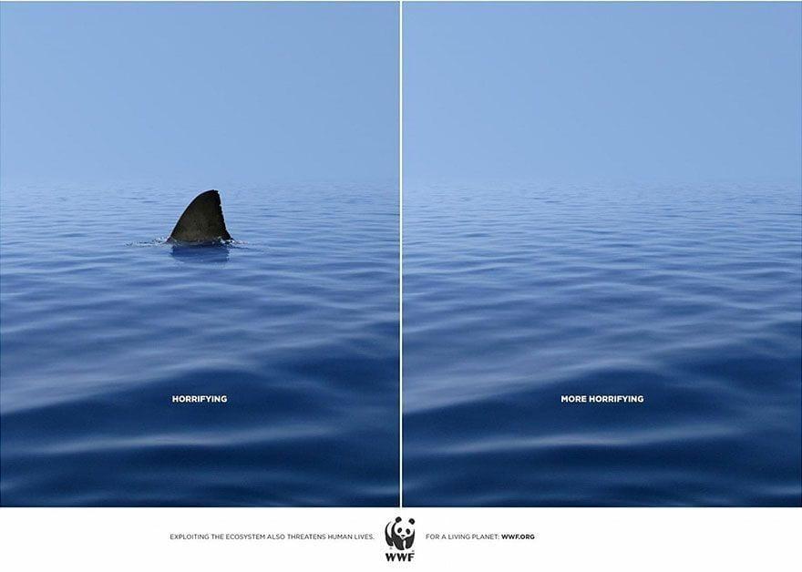 tiburon01