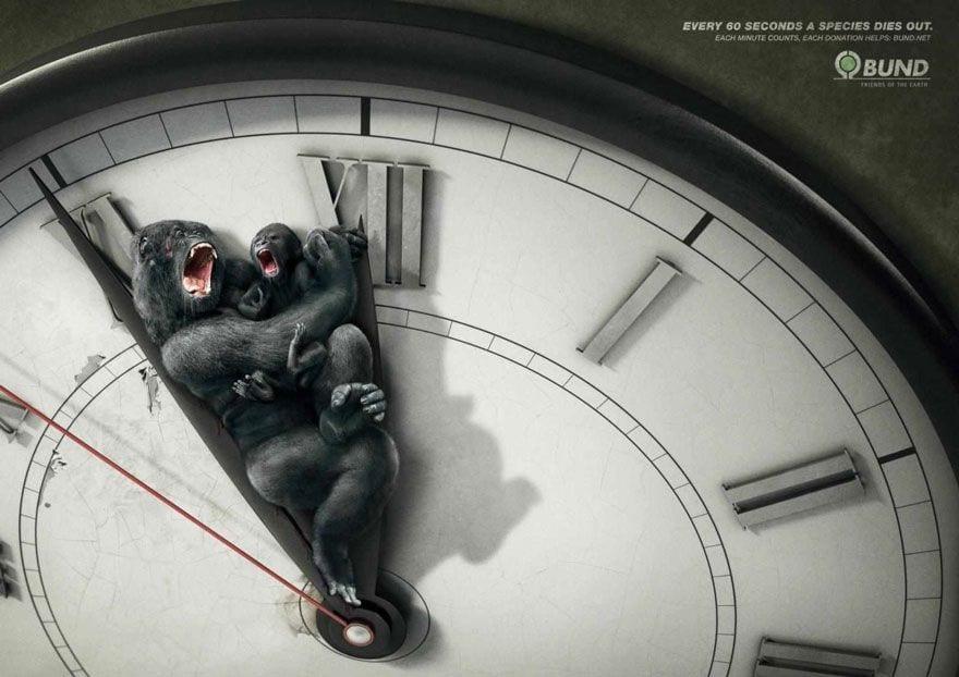 tiempoGorilas
