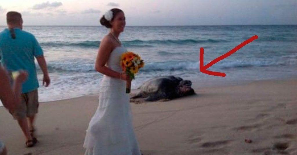 tortuga boda dest