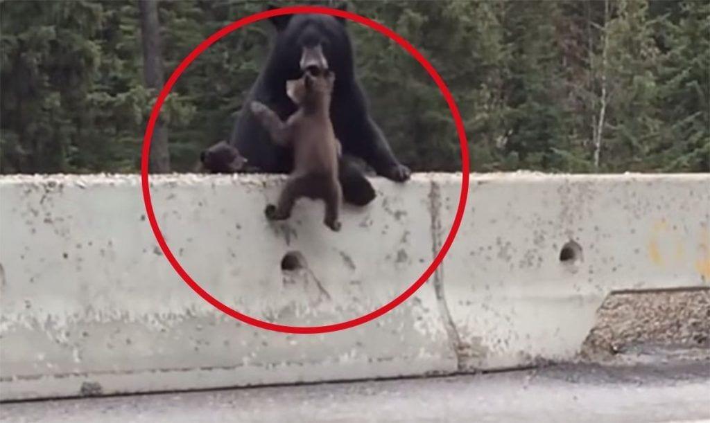 animales salvando a otros