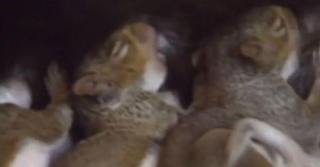 Gata adopta a ardillas huérfanas