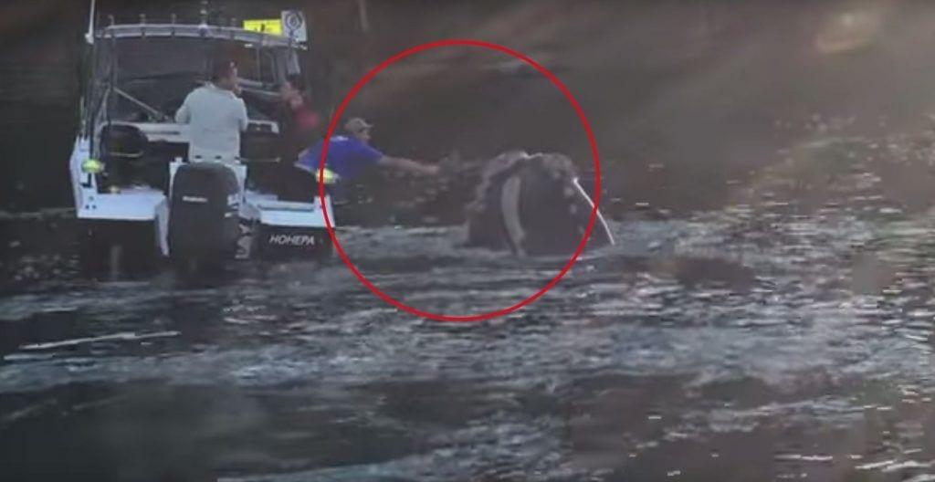 ballena pide ayuda