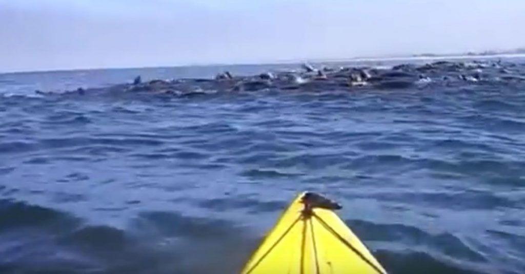 ballena sopresa tabla