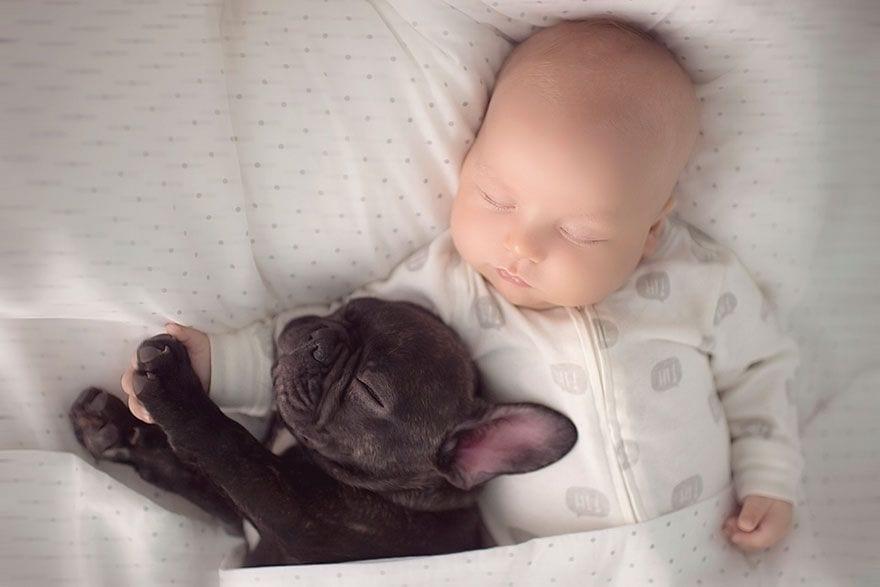 bebe y bulldog 3