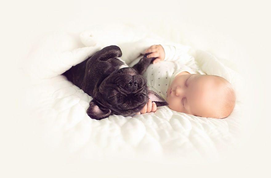 bebe_y_bulldog_9