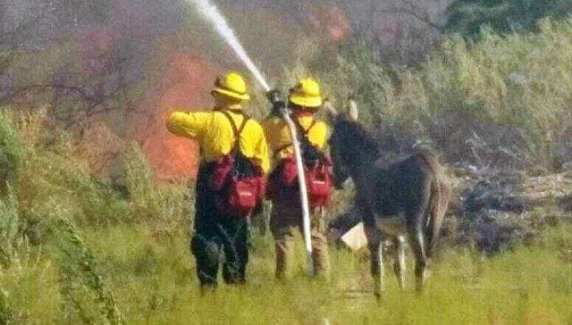 burro incendio02