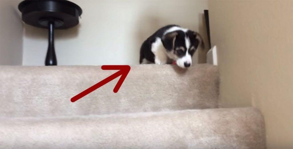 cachorro escaleras
