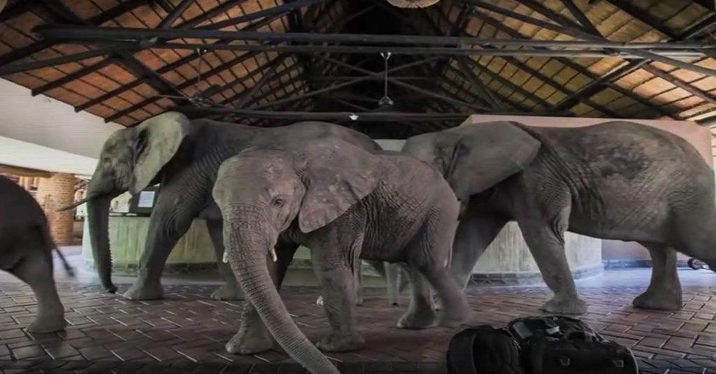 elefantes hotel