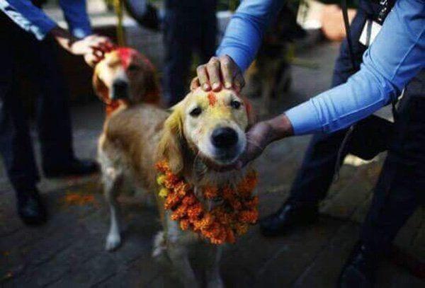 festival_perros_6