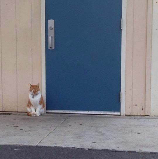 gato-estudiante-02