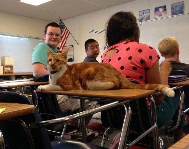 gato-estudiante-08
