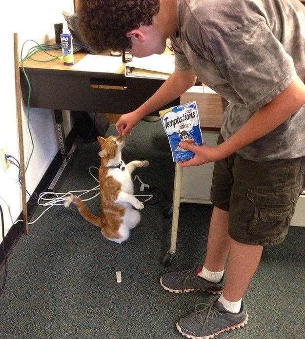 gato-estudiante-09