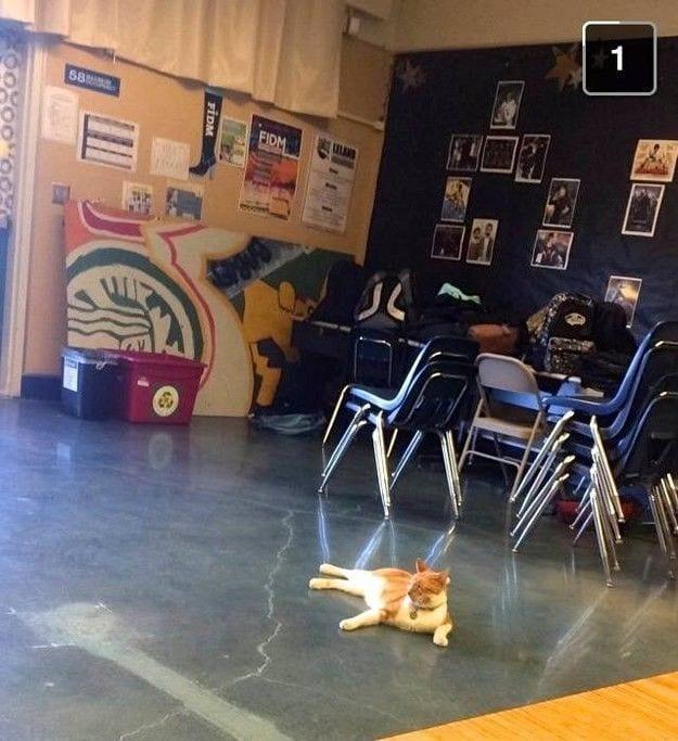 gato-estudiante-12