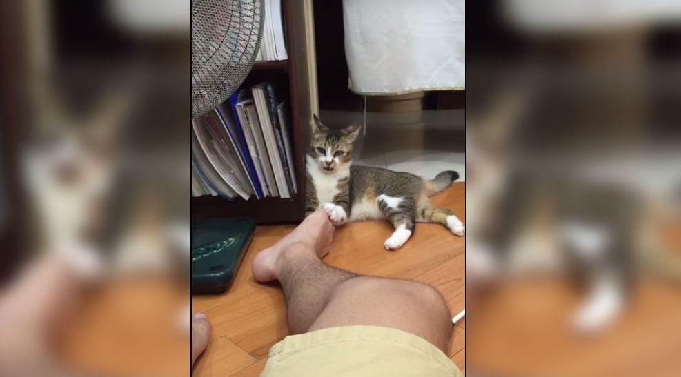 Un gato se vuelve loco al oler un pie