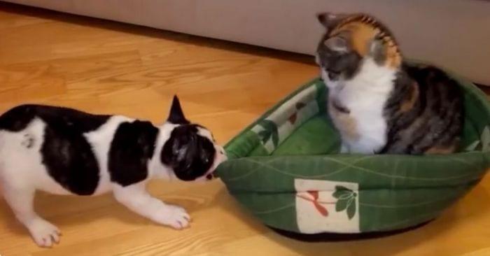 gatos roba cama perros