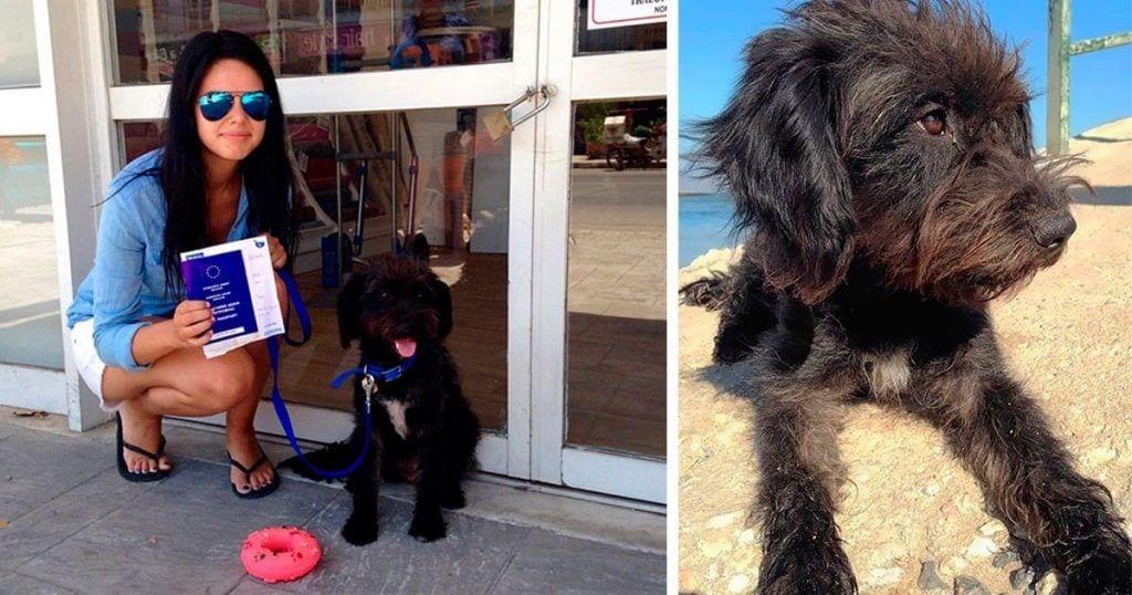 Adopta a la perra que le salvó la vida
