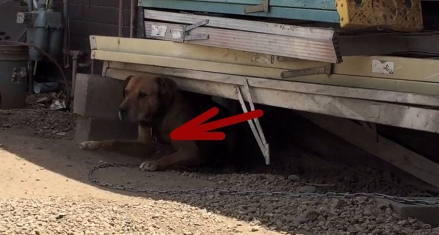 Salvan a un perro que llevaba 10 años atado