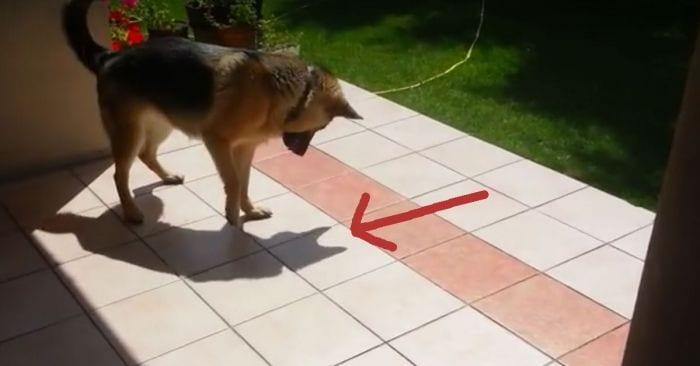 perro sombra