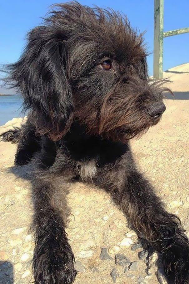 perro_adoptado_3