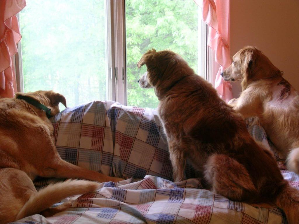 perros casa feliz6